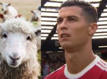 Cristiano-Ronaldo-pecore